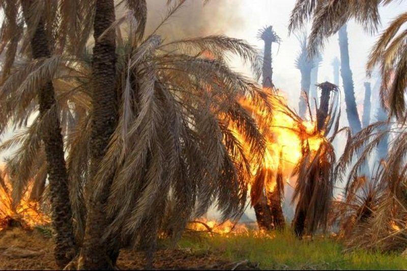 گرمای شدید آتش بجان نخیلات بزمان انداخت